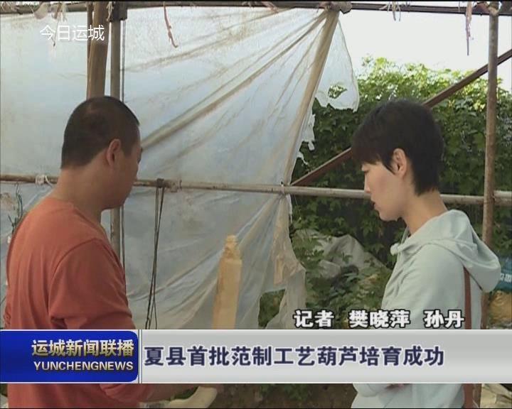 夏县首批范制工艺葫芦培育成功
