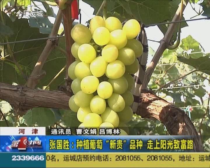 """河津张国胜:种植葡萄""""新贵""""品种 走上阳光致富路"""