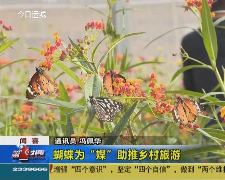 """闻喜:蝴蝶为""""媒""""助推乡村旅游"""