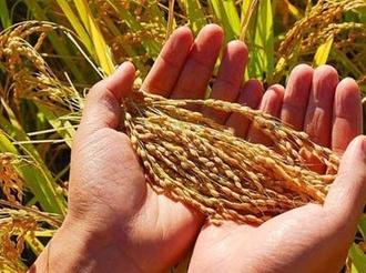 """世界粮食日:解读中国粮食丰收""""密码"""""""