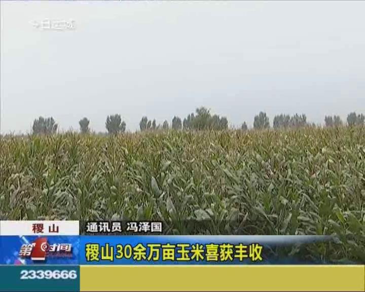 稷山30余万亩玉米喜获丰收