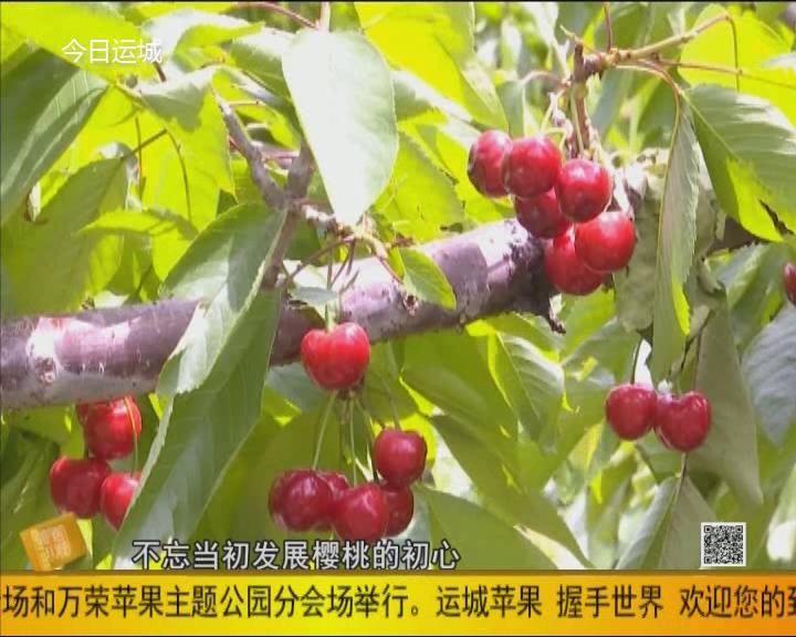 垣曲王红义:发展樱桃产业 带农增收践初心