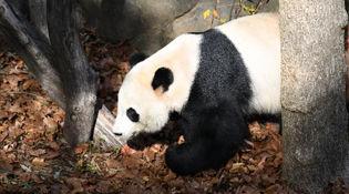 """陜西:林密山青環境美 野生動物""""好還鄉"""""""