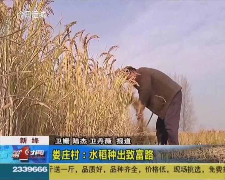 新绛娄庄村:水稻种出致富路