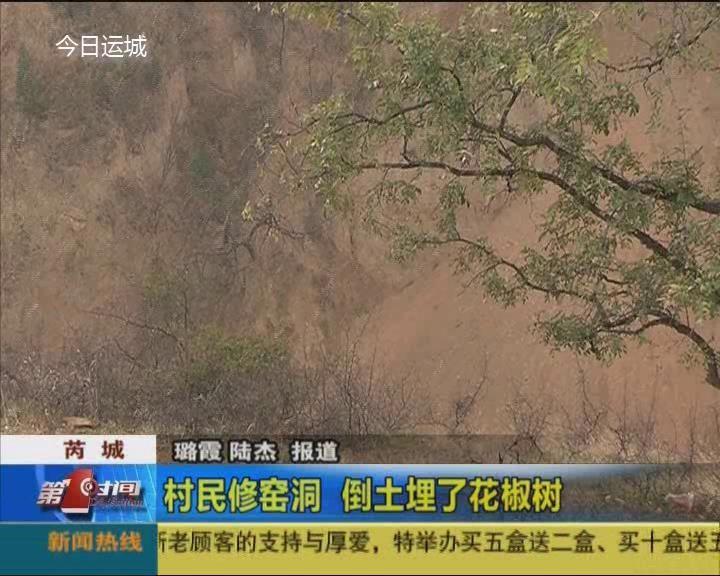 芮城:村民修窑洞 倒土埋了花椒树