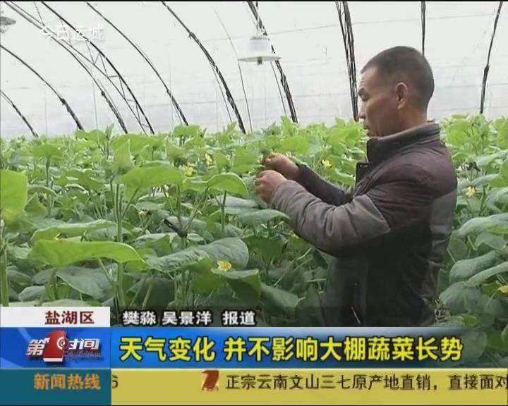 天气变化 并不影响大棚蔬菜长势