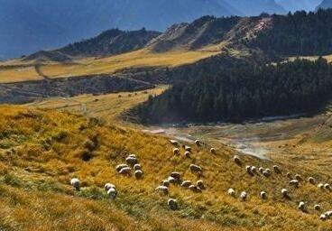 祁连山国家公园青海片区生态质量继续趋好