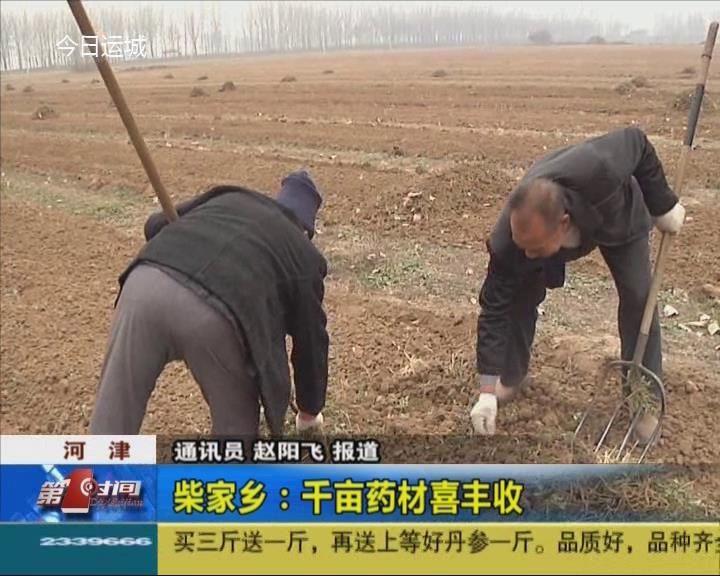 河津柴家乡:千亩药材喜丰收