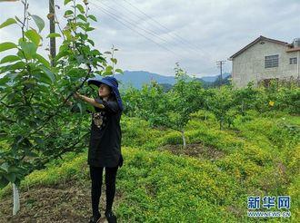 """县域经济强县的""""扶贫经""""——来自湖南浏阳市的脱贫攻坚调查"""