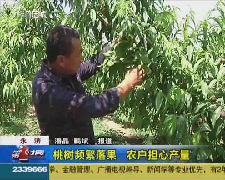 永济:桃树频繁落果 农户担心产量