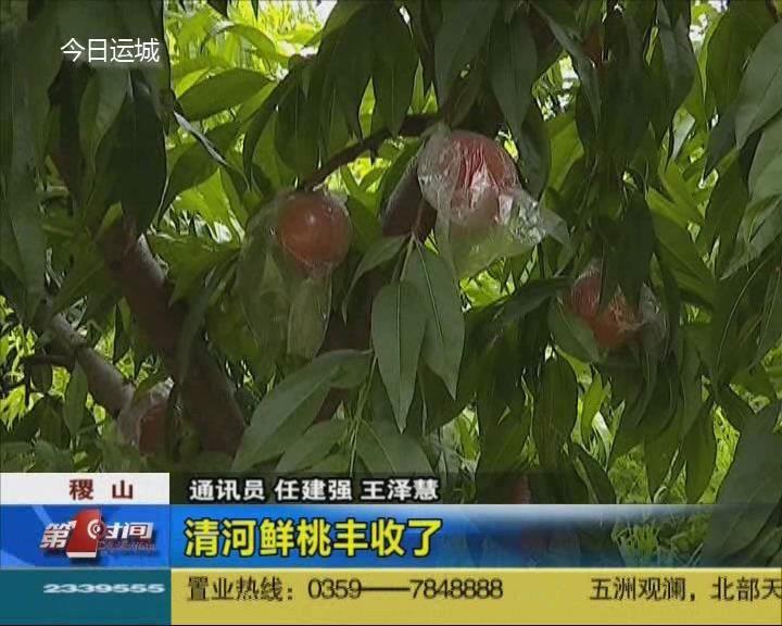 稷山:清河鲜桃丰收了