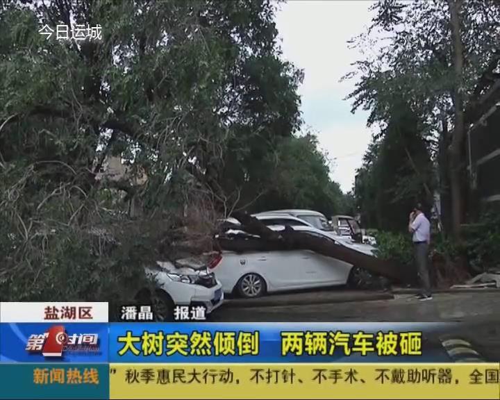 市区一大树突然倾倒 两辆汽车被砸