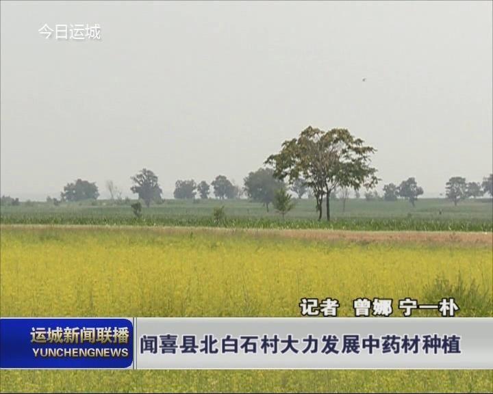 【乡村振兴进行时】闻喜县北白石村大力发展中药材种植