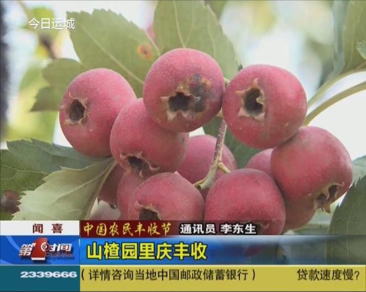 【中国农民丰收节】闻喜:山楂园里庆丰收