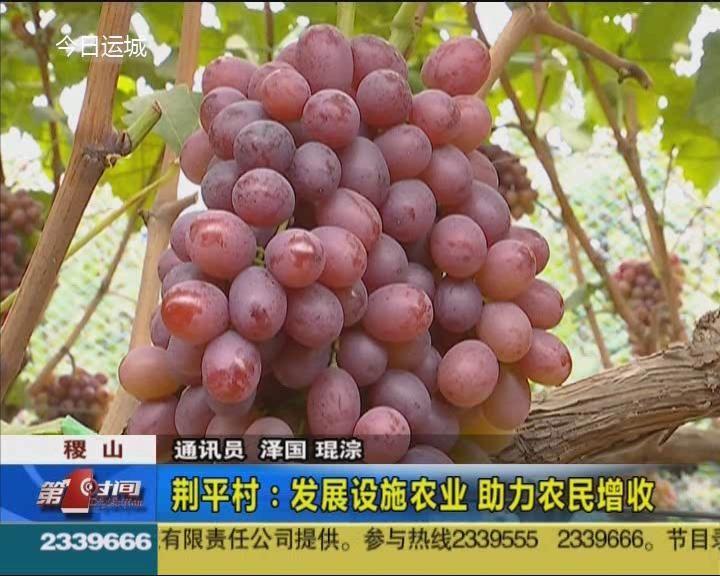 稷山荊平村:發展設施農業 助力農民增收