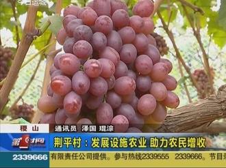 稷山荆平村:发展设施农业 助力农民增收