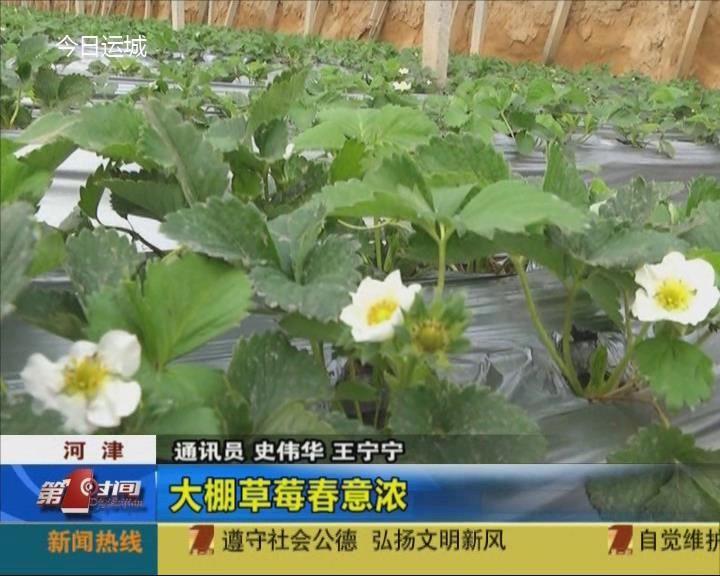 河津:大棚草莓春意浓
