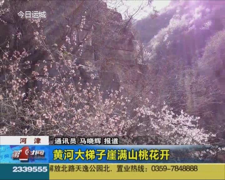 河津:黄河大梯子崖满山桃花开