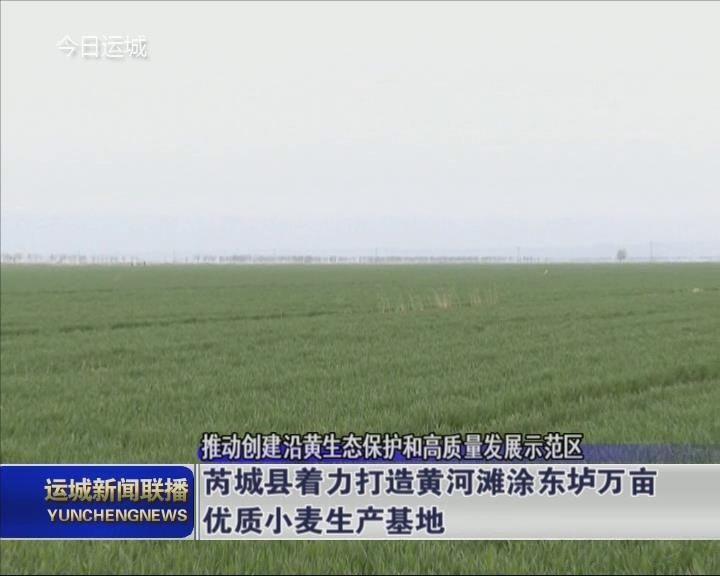 """芮城縣建設黃河灘涂東壚萬畝優質小麥生產基地 打造""""黃河流域現代農業先行區"""""""