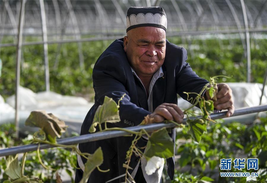 新疆:夏日农忙正当时