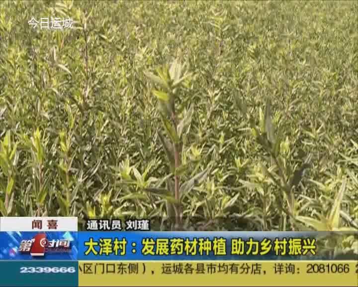 聞喜大澤村:發展藥材種植 助力鄉村振興