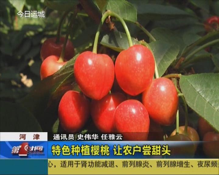 河津:特色種植櫻桃 讓農戶嘗甜頭