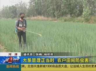 大葱管理正当时 农户田间防虫害