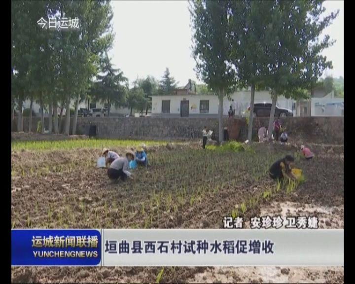 垣曲县西石村试种水稻促增收