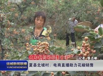 夏县北坡村:电商直播助力花椒销售