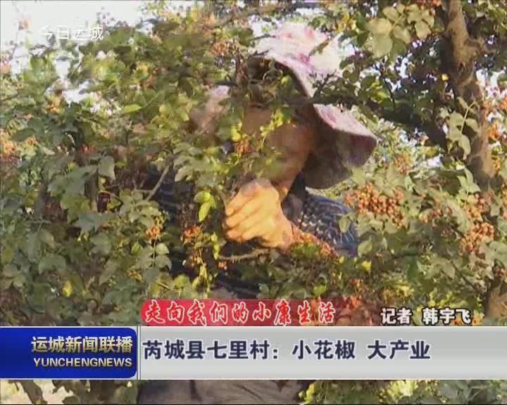 【走向我们的小康生活】芮城县七里村:小花椒 大产业