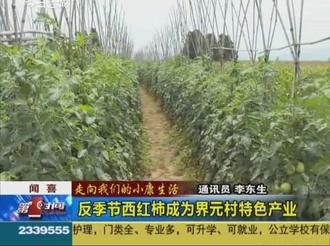 【走向我们的小康生活】闻喜:反季节西红柿成为界元村特色产业