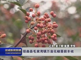 垣曲县毛家湾镇万亩花椒喜获丰收