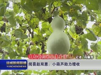 闻喜赵双惠:小葫芦助力增收