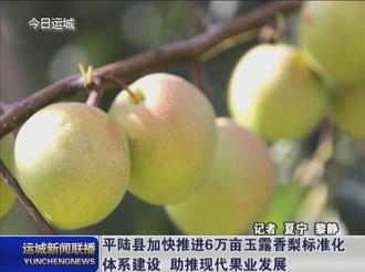 平陆县加快推进6万亩玉露香梨标准化体系建设 助推现代果业发展