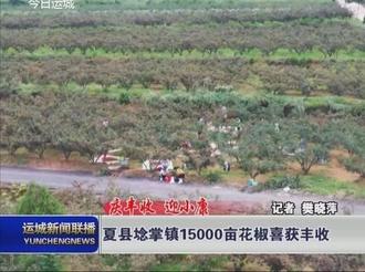 【庆丰收 迎小康】夏县埝掌镇15000亩花椒喜获丰收