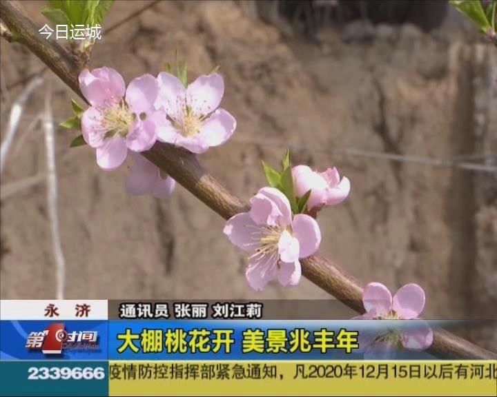 永濟:大棚桃花開 美景兆豐年