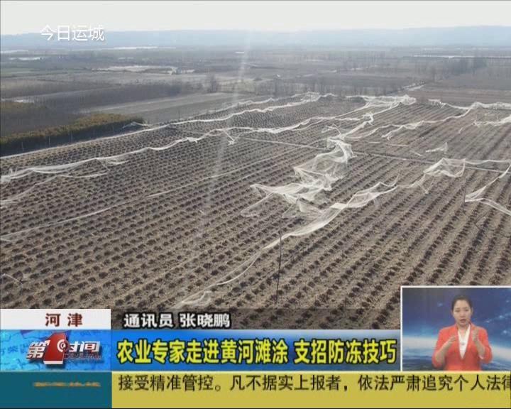 河津:農業專家走進黃河灘涂 支招防凍技巧