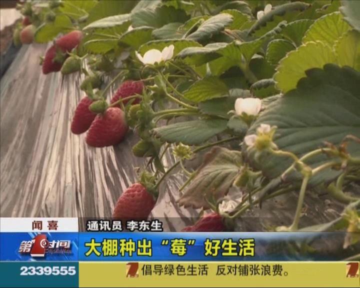 """聞喜:大棚種出""""莓""""好生活"""