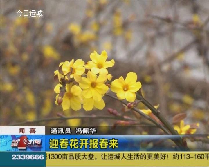 聞喜:迎春花開報春來