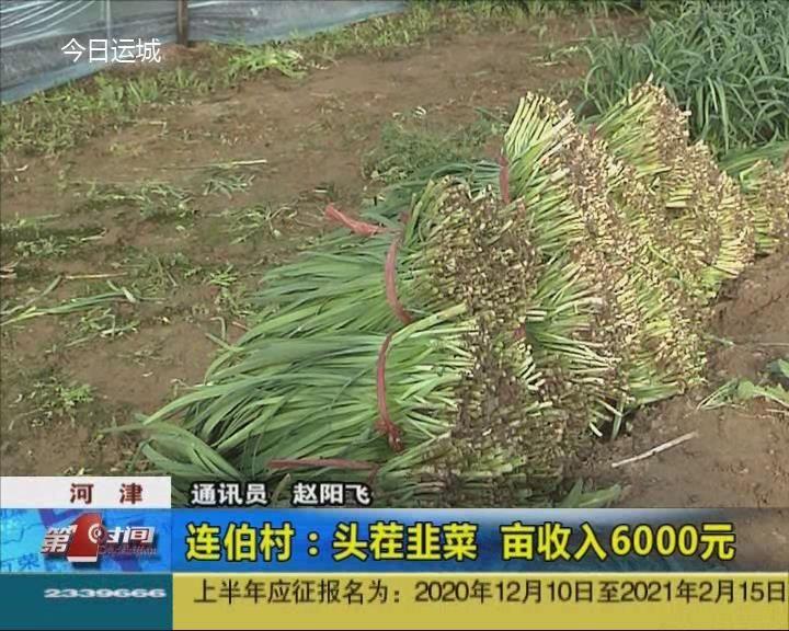 河津連伯村:頭茬韭菜 畝收入6000元