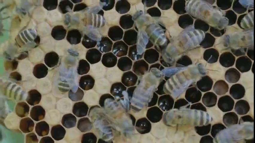 英國小哥走進云南怒江 體驗中蜂養殖