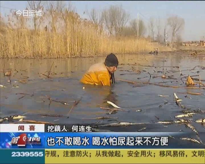 河東微生活:走近聞喜官莊挖藕人